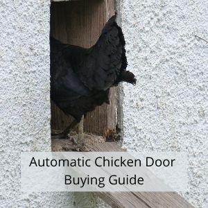 Automatic Chicken Door - Buying Guide